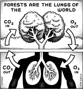 Forests are the lungs of the world