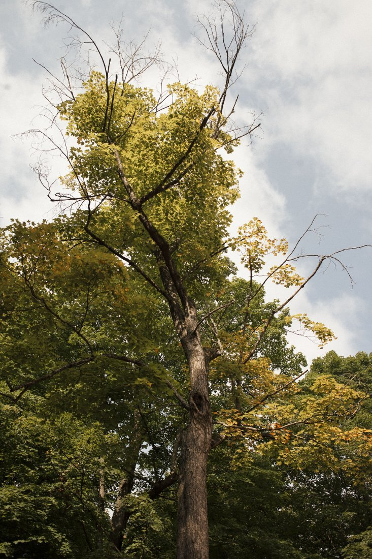 Stressed Tree