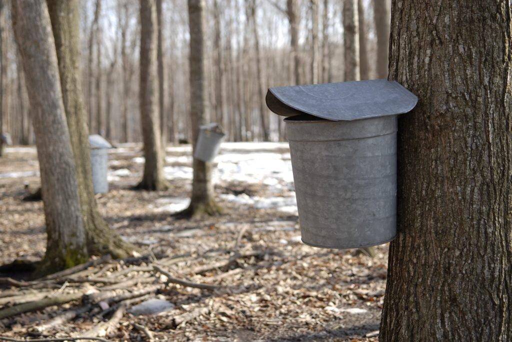 Maple Buckets