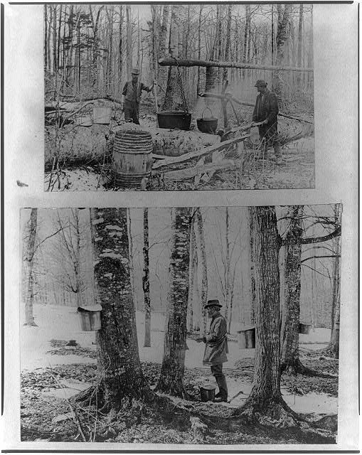 """Gathering and processing maple syrup, ca. 1900""; 1900; courtesy of Library of Congress"