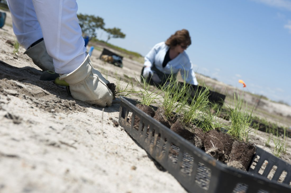 UNFI planting